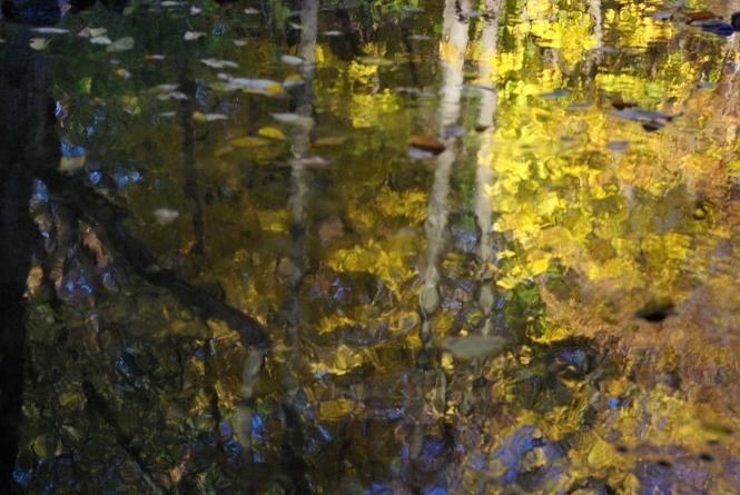"Creek Impressions Photo Image 12 X 8"""
